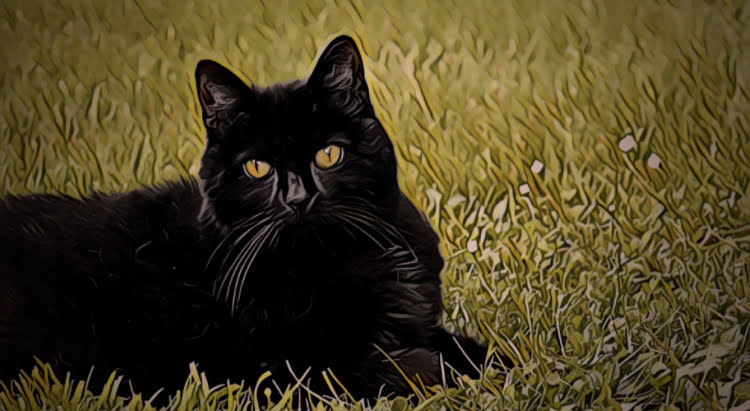 Fiction: Black Cat